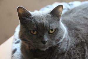cat-1049159_1280