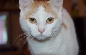 cat-1380217_1280