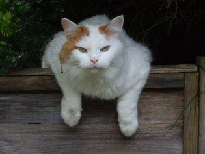 cat-1581689_1280