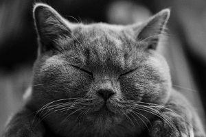 cat-1634369_1280