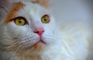 cat-714668_1280