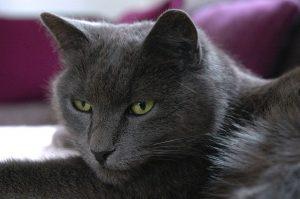 cat-776871_1280