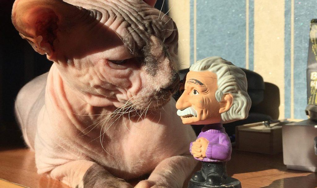 Gato Esfinge