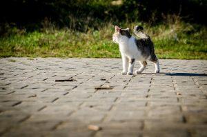El gato marca su territorio constantemente