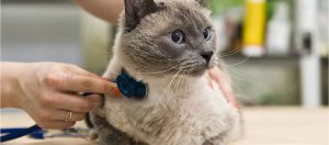 Parásitos intestinales en gatos