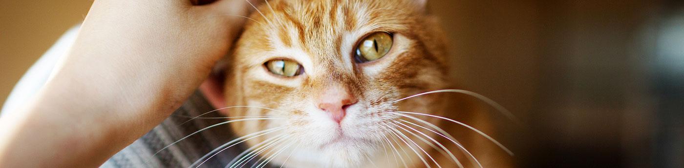 Información, consejos, alimentación y cuidados sobre los Gatos