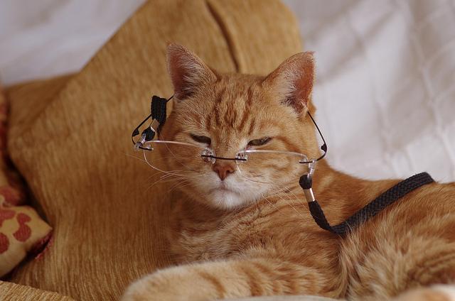 Cuanto vive un gato