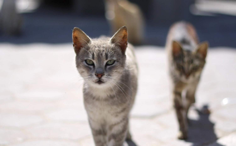 Llevarse un gato de la calle a casa
