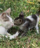 Como tener dos gatos en casa