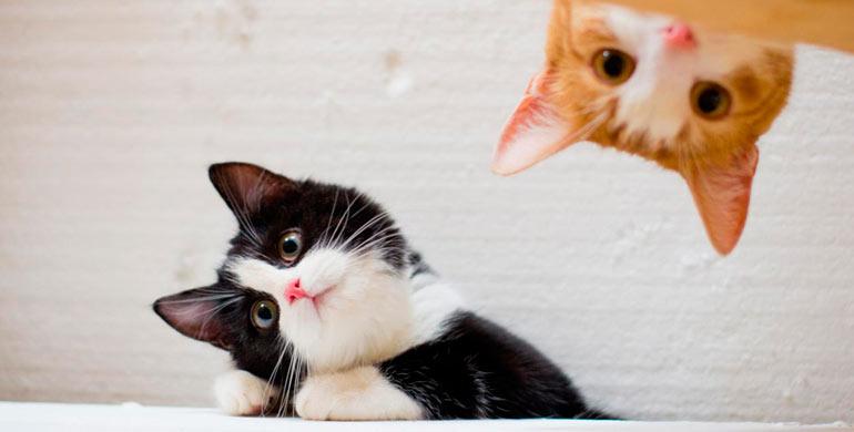 gato te entiende