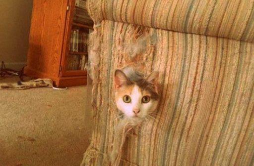 gato arañe todos los muebles de tu casa