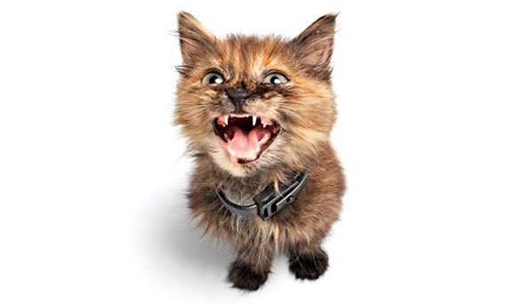 ¿Cómo castigar correctamente a un gato?