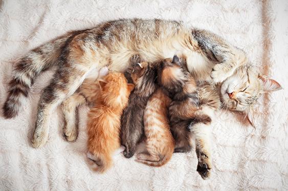¿Cómo cuidar a un gatito recién nacido?