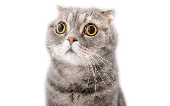 ¿Cómo hacer amistad con un gatito?