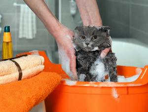 ¿Cómo lavar a los gatos?