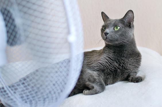 Cómo proteger al gato de un golpe de calor