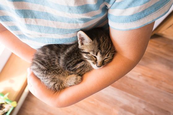 El gato grita por las noches: ¿Cómo evitarlo?