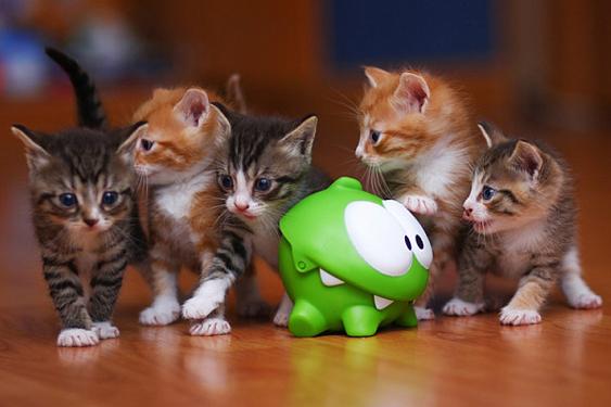 Los 8 mejores juguetes para gatos