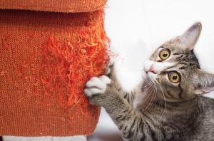 ¡Mi gato es un monstruo! ¿Cómo evitar que el gato muerda y rompa todo?