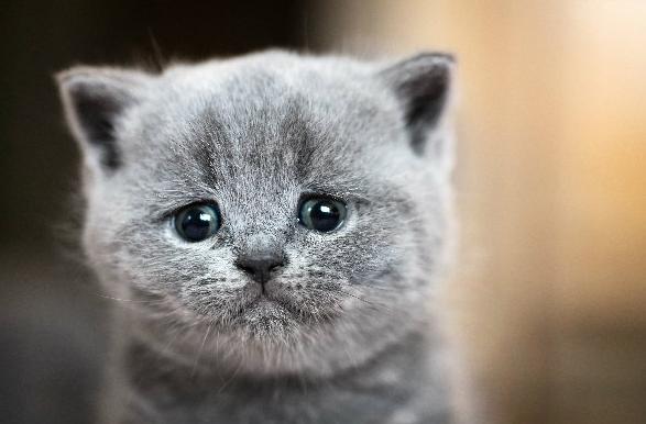¿Por qué llora el gato?