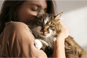 ¿Por qué ronronean los gatos y qué significa?